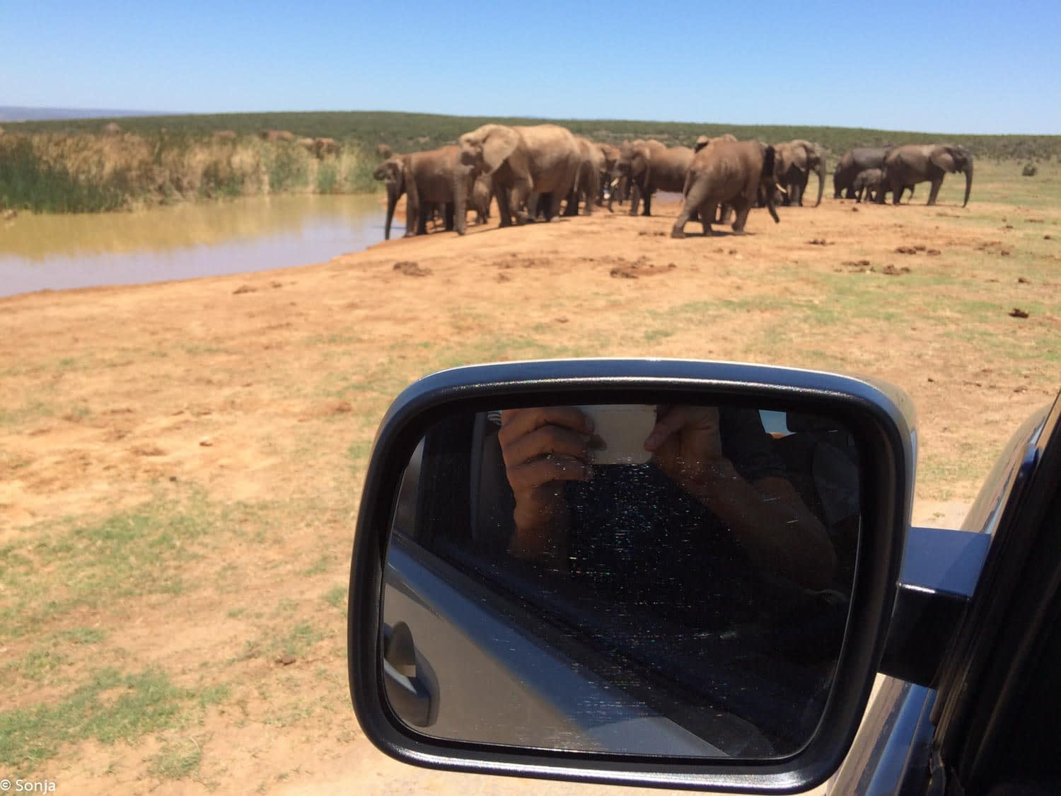 group of elephants in Addo Elephant Park