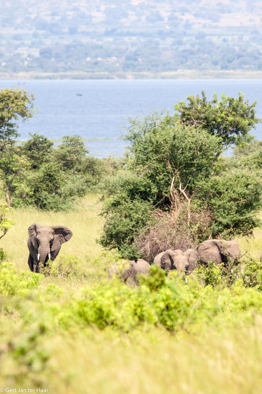 elephants, Murchison Falls National Park, Uganda