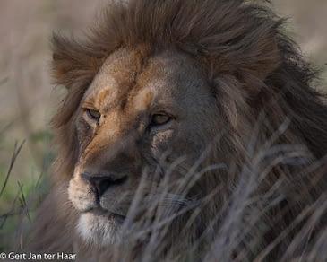 Serengeti vol verrassingen